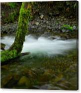 Lone Tree And Running Water Canvas Print