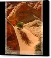 Lone Tree At Coyote Buttes Arizona Canvas Print