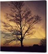 Lone Tree At Sunrise Canvas Print