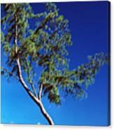 Lone Tree Hawaii Canvas Print