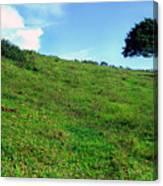 Lone Tree Hill  Canvas Print