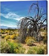 Lone Tree In Blooming Desert Canvas Print