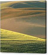 Lone Tree In The Palouse  Canvas Print