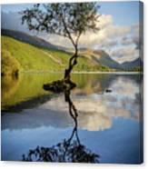 Lone Tree, Llyn Padarn Canvas Print