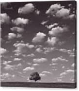 Lone Tree Morning In B And W Canvas Print