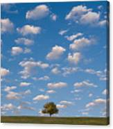 Lone Tree Morning Canvas Print