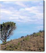 Lone Tree On Hillside In Central Oregon High Desert Canvas Print