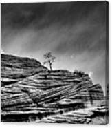 Lone Tree Rid Canvas Print