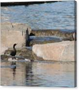 Lone Waterfowl Canvas Print