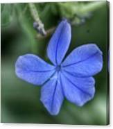 Lone Wildflower Canvas Print