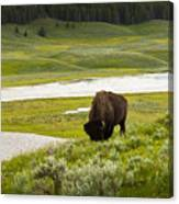 Lonely Bison Valley Canvas Print