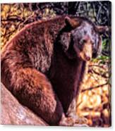 Lonely Black Bear On A Rock Canvas Print