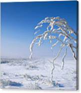 Lonely Frost  Canvas Print