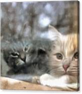 Lonely Kittens Behind The Glass Canvas Print