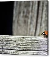 Lonely Ladybug Canvas Print