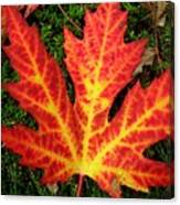 Lonely Leaf ... Canvas Print