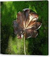 Lonely Leaf On Moss Canvas Print