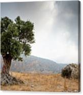 Lonely Olive Tree And Stormy Cloudy Sky Canvas Print
