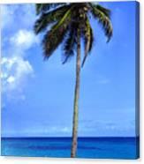 Lonely Palm Tree Los Tubos Beach Canvas Print