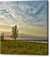 Lonely Tree In Dintelse Gorzen Canvas Print
