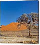 Lonely Tree In Sossusvlei Canvas Print