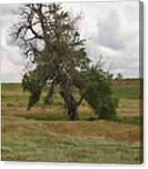 Lonely Tree In West Texas Canvas Print