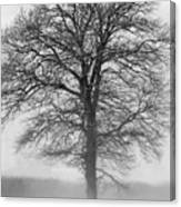 Lonely Winter Tree Canvas Print
