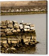 Lonesome Gull Canvas Print