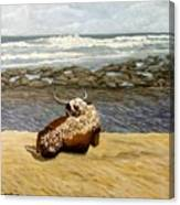 Lonesome Nguni Canvas Print