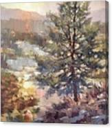 Lonesome Pine Canvas Print