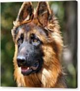 Long Coated German Shepherd Dog Canvas Print