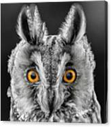 Long Eared Owl 2 Canvas Print
