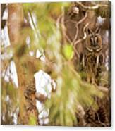 Long-eared Owl Asio Otus In A Tree Canvas Print