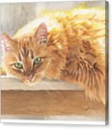 Long-hair Cat Canvas Print