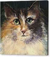 Long Haired Cat Canvas Print