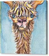 Long Neck Alpaca Canvas Print