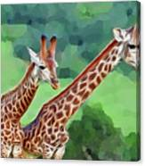 Long Necked Giraffes 2 Canvas Print