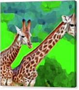 Long Necked Giraffes 3 Canvas Print