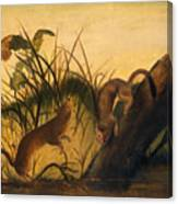 Long - Tailed Weasel Canvas Print