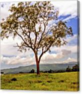 Long Tree Shenandoah Valley West Virginia  Canvas Print