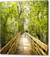 Long Walks Canvas Print