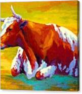Longhorn Cow Canvas Print