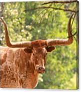 Longhorn Steer Canvas Print