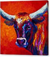 Longhorn Steer Canvas Print