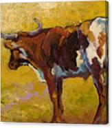 Longhorn Study Canvas Print