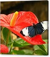 Longwing Canvas Print