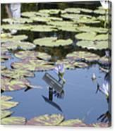 Longwood Lillies Canvas Print