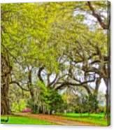 Longwood Plantation In Spring Glory Canvas Print