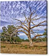 Lonley Tree Canvas Print