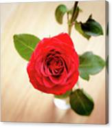 Look Down On A Rose Canvas Print